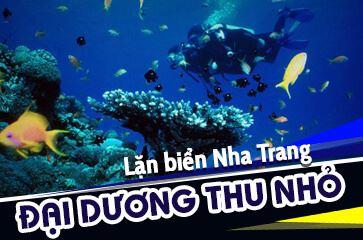 Lặn Biển Nha Trang - Khám Phá Đại Dương Thu Nhỏ!