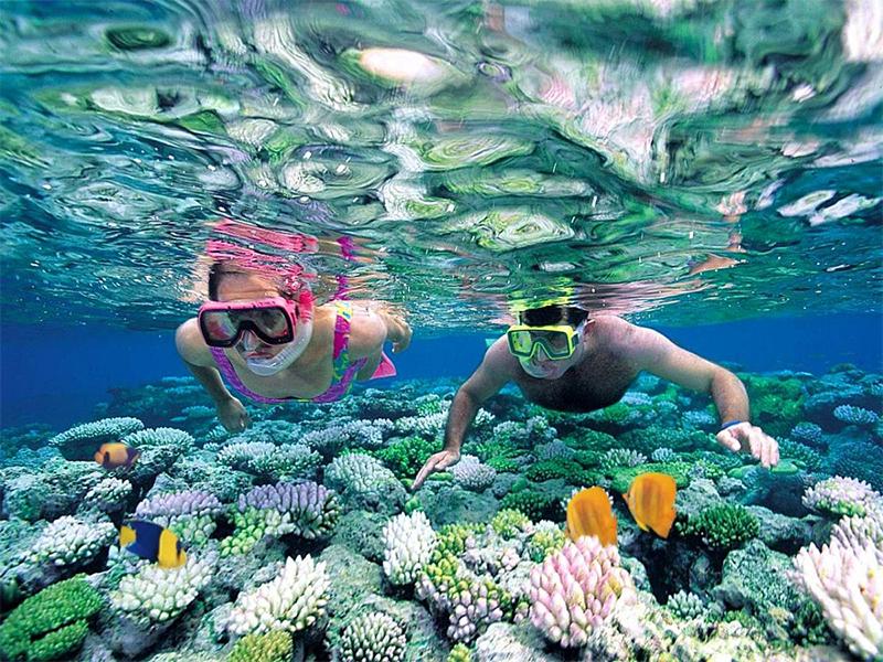 Lặn ngắm san hô dưới biển
