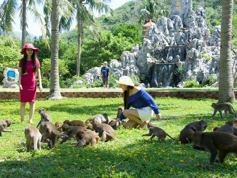 Vui chơi với những chú khỉ