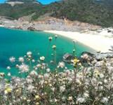Đảo Bình Hưng Cam Ranh
