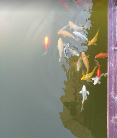 Cá trong hồ lục giác
