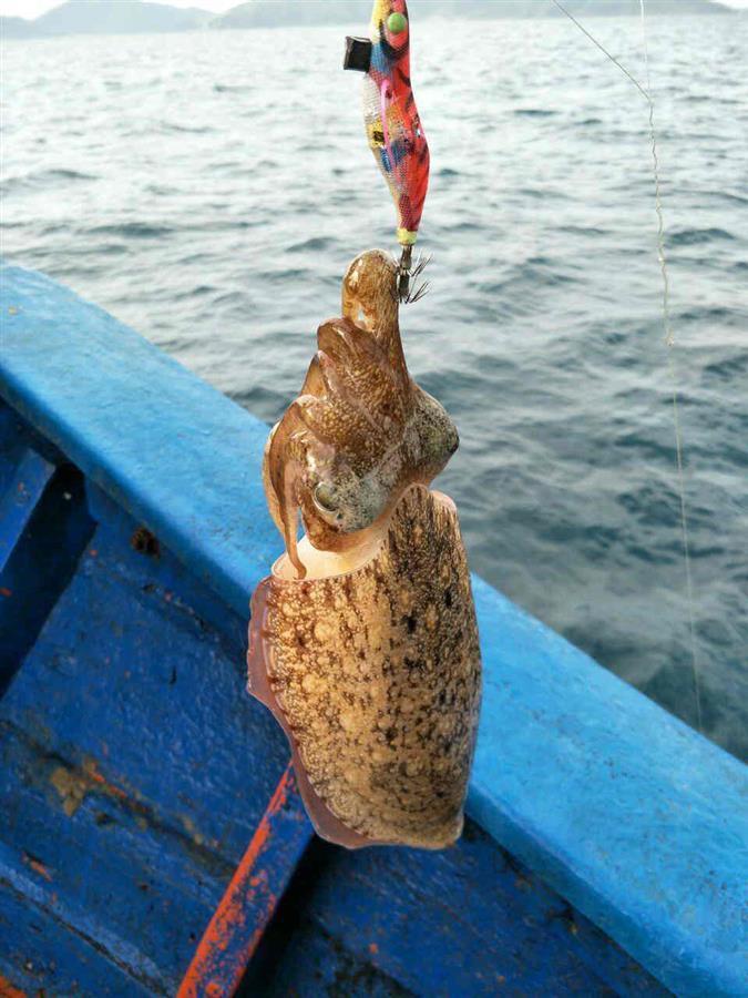 Câu cá trên đảo hòn Mun