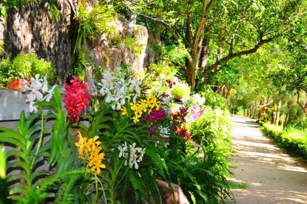 Con đường hoa lan