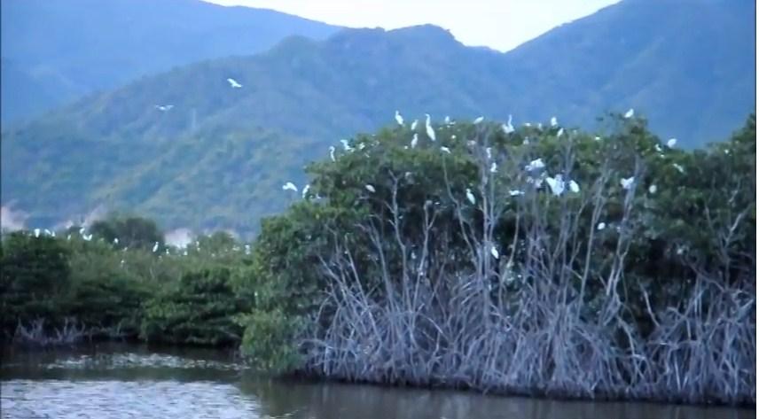 Đàn chim tại rừng ngập mặn