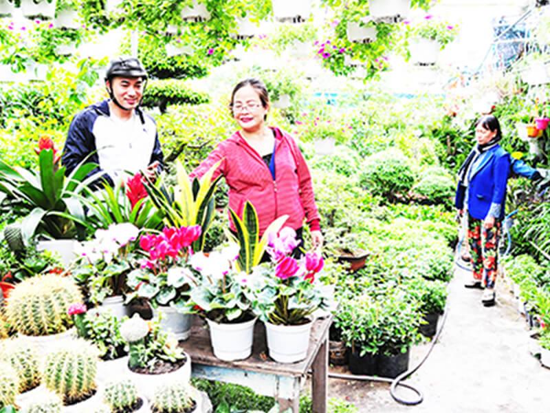 Cây Cảnh Sen đá – P&P Garden Nha Trang
