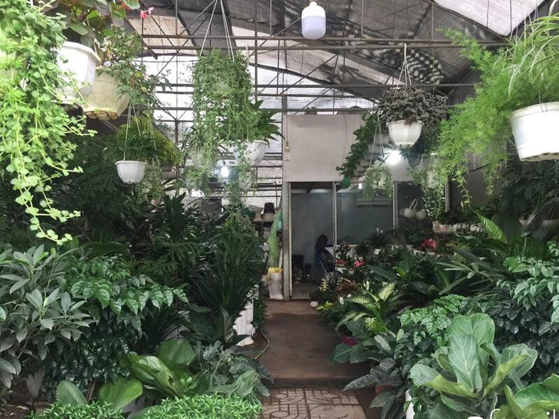 Cây Cảnh Batui Garden Nha Trang