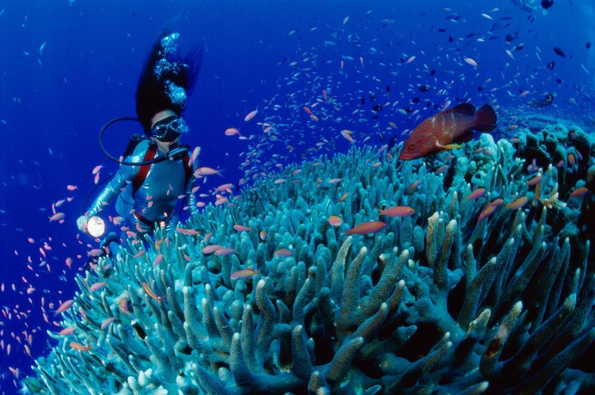 Lặn Biển Khám Phá Đại Dương!