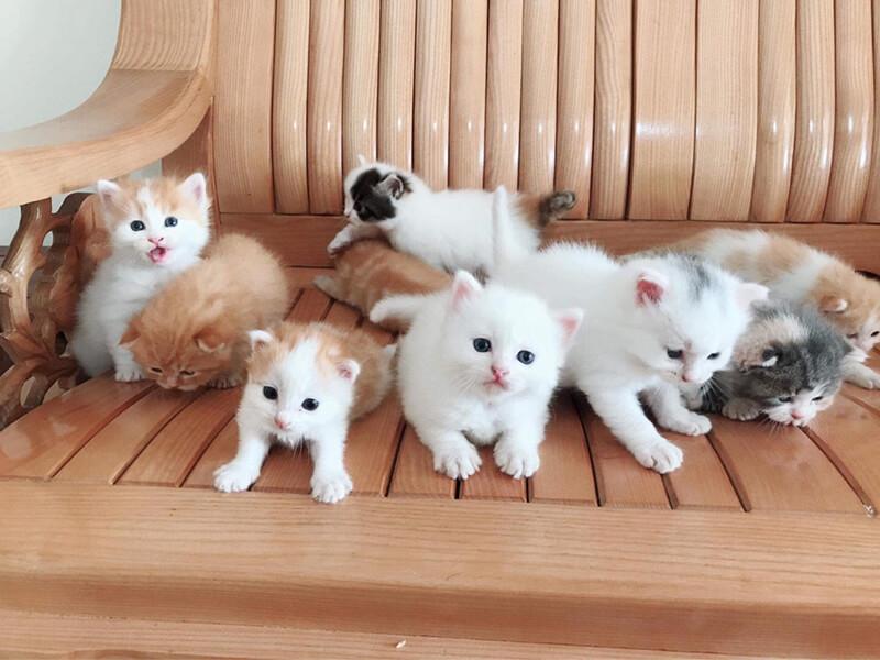 Hammy Pet Shop – Siêu thị thú cưng Nha Trang