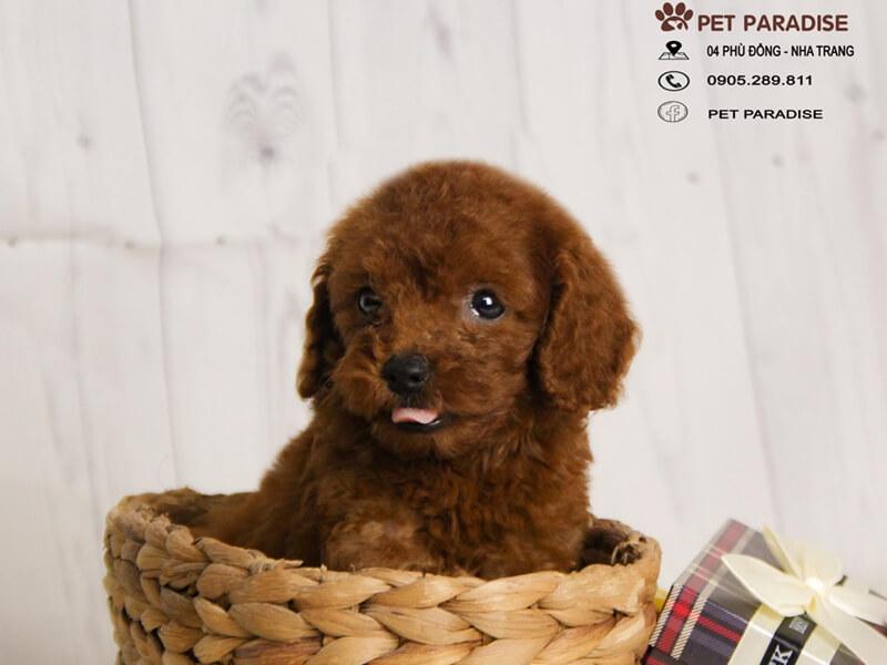 Pet Paradise Nha Trang - Shop Thú Cưng Nha Trang
