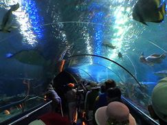 Tour 4 Đảo Lặn Biển