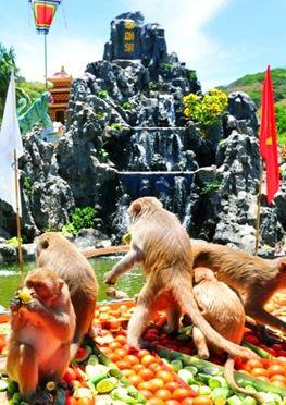 Tour Đảo Khỉ Suối Hoa Lan