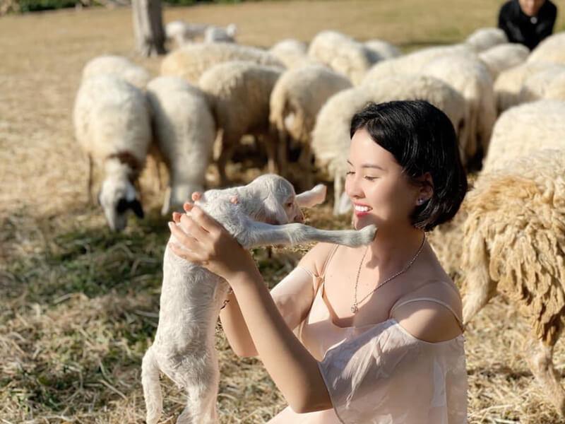 Vui Chơi Cùng Đàn Cừu