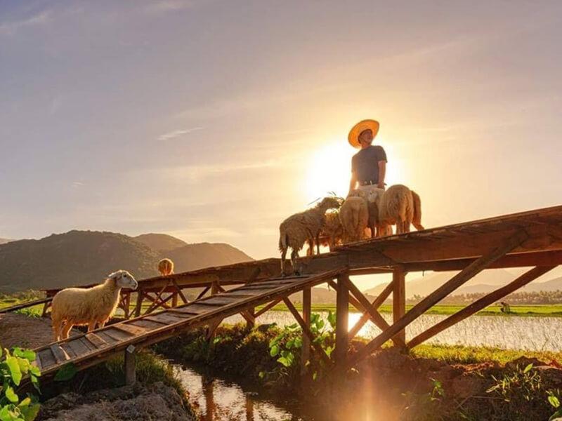 Thời Điểm Đẹp Nhất Du Lịch Đồng Cừu Suối Tiên!