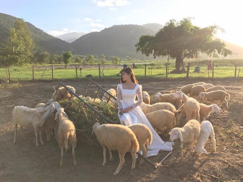 Khám Phá Đồng Cừu Suối Tiên