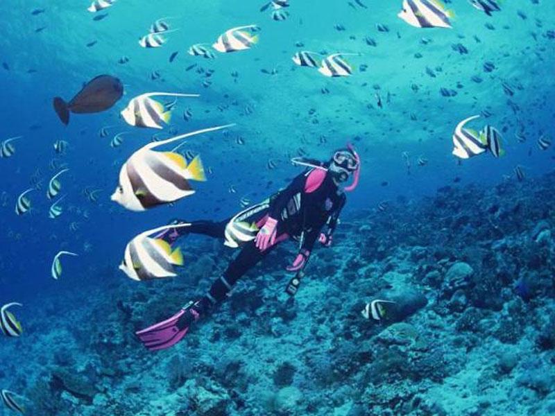 Khám phá đại dương nhiều màu sắc