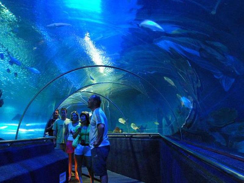 Du khách chiêm ngưỡng loài sinh vật biển