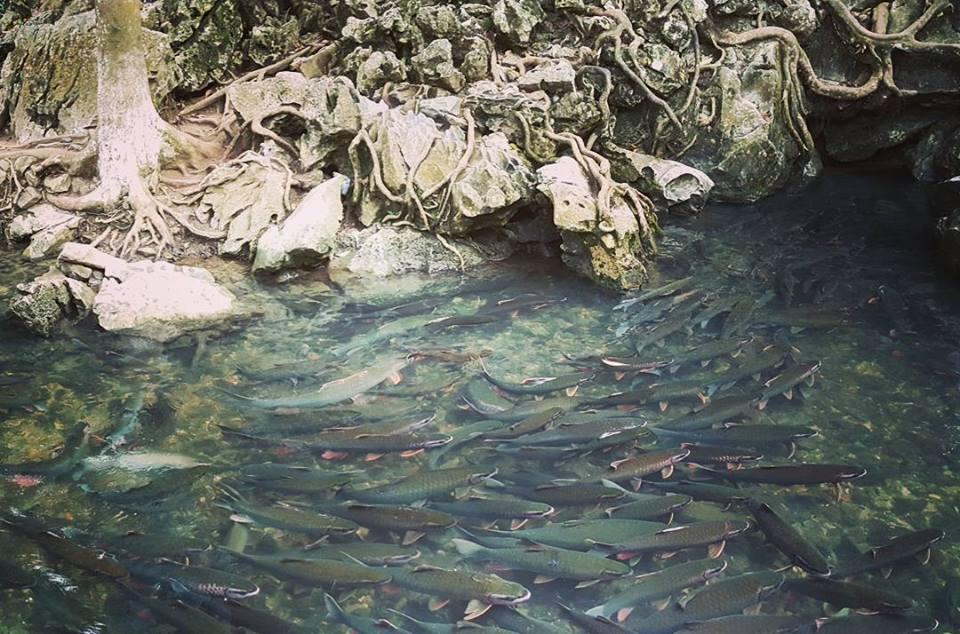 Suối cá thần Nha Trang