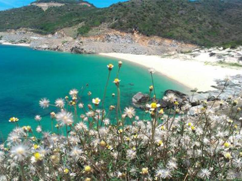 Vẻ đẹp biển Bình Hưng