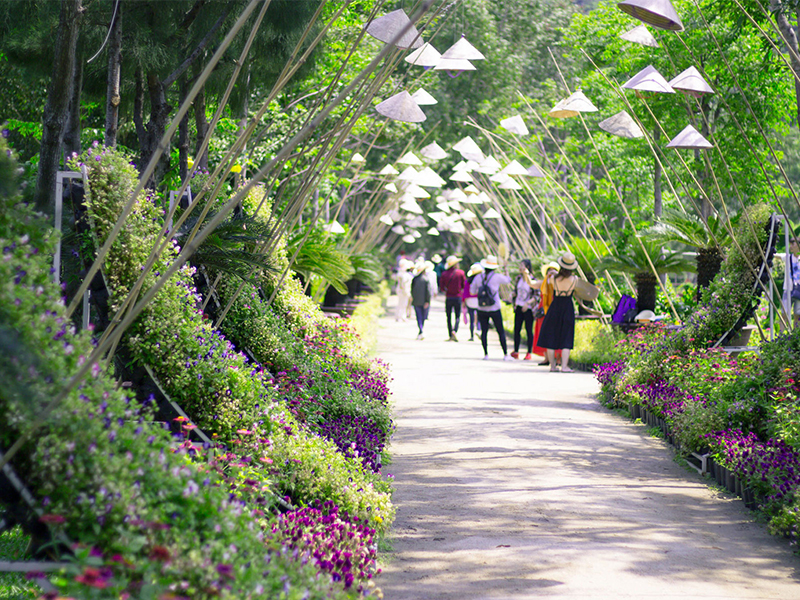 Vẻ đẹp con đường hoa lan