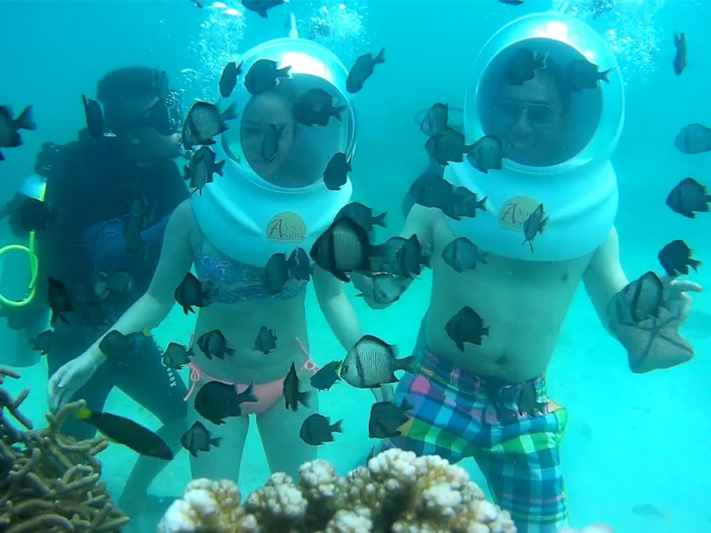 Hành trình khám phá sinh vật biển