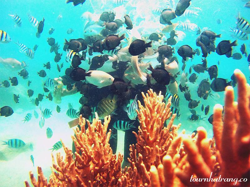 Khám phả vẻ đẹp dưới đáy biển