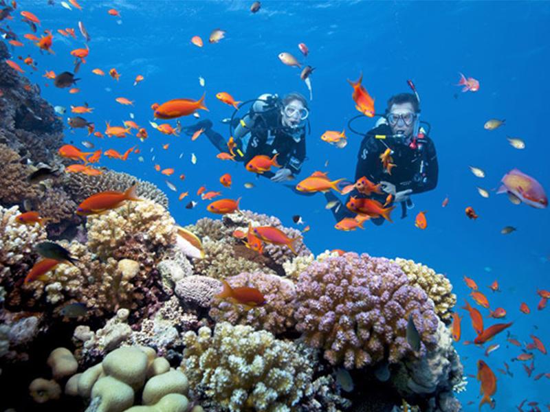Lặn biển Đảo Dừa