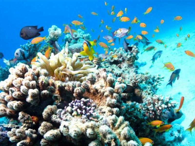 Lặn biển ngắm san hô Hòn Một