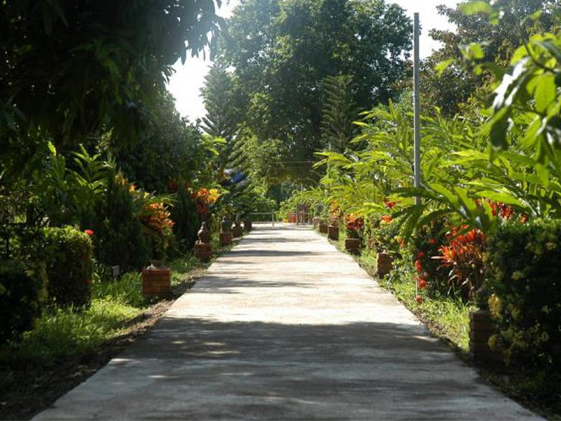 Con đường dẫn vào vườn trái cây