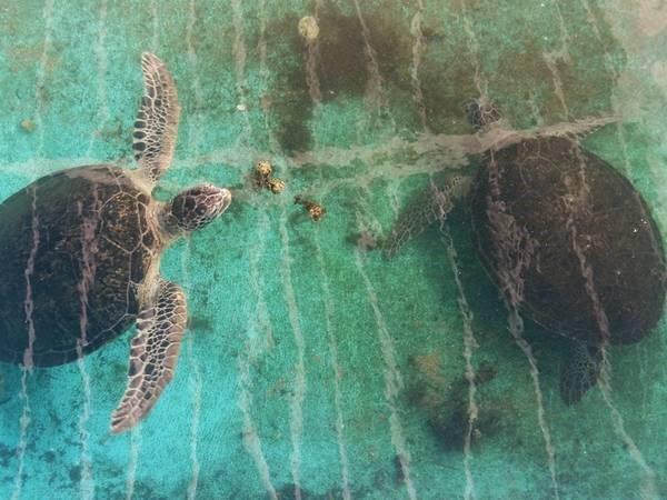 Khu bảo tồn Rùa Biển