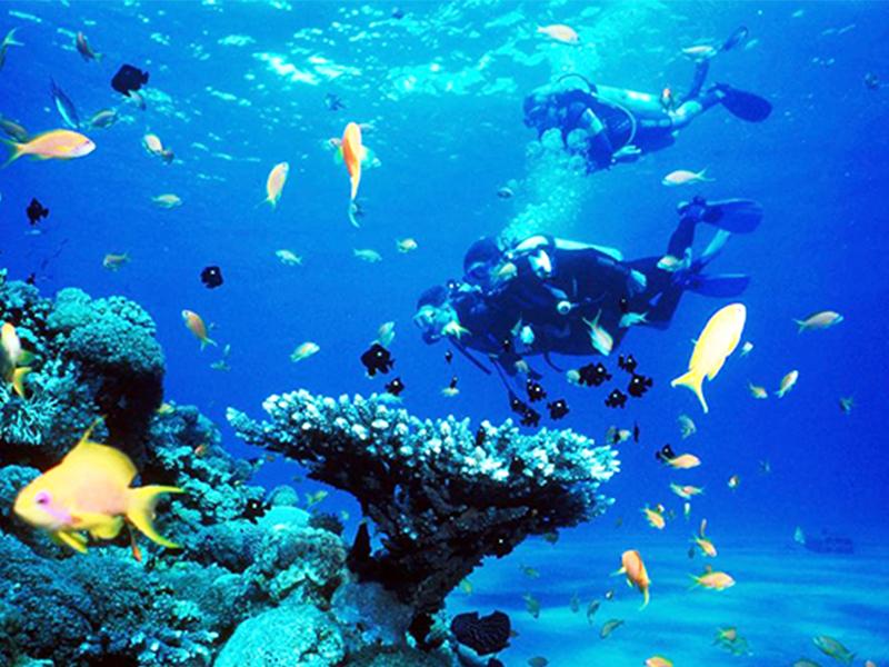 Lặn ngắm san hô Hòn Sầm