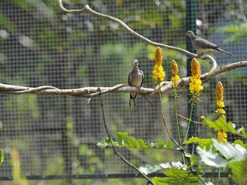 Đa dạng các loại chim