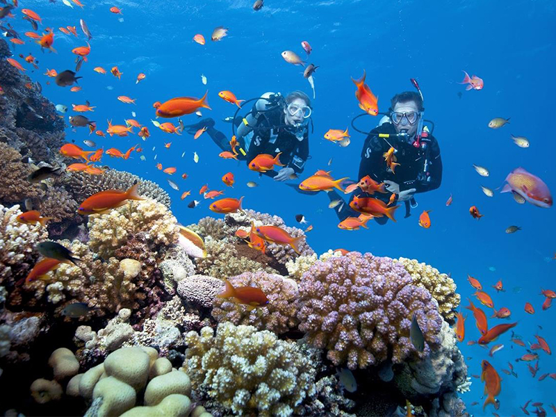 Lặn biển đảo khỉ Nha Trang